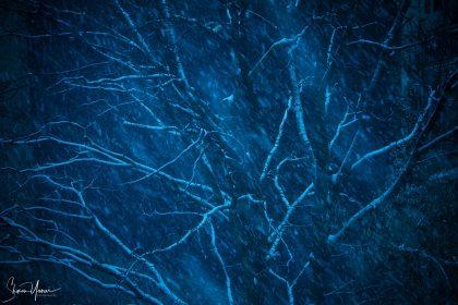 קור, שלג, סופת שלגים, עץ בודד עומד נלחם לשרוד. עבודה בגוונים של כחול המשדרת עוצמה וכוח ומתאימה במיוחד למשרד ולסלון