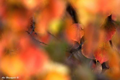 תמונת תערובת סתיו ועוד מבחר עשיר של תמונות טבע ותמונות של סתיו