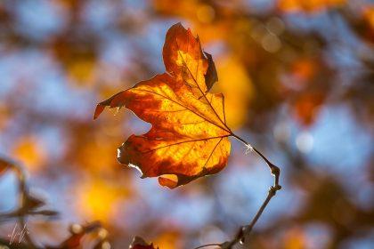 תמונה לסלון באווירה חמימה של עלה בסתיו עכשיו באתר תמונות פוטו ארט