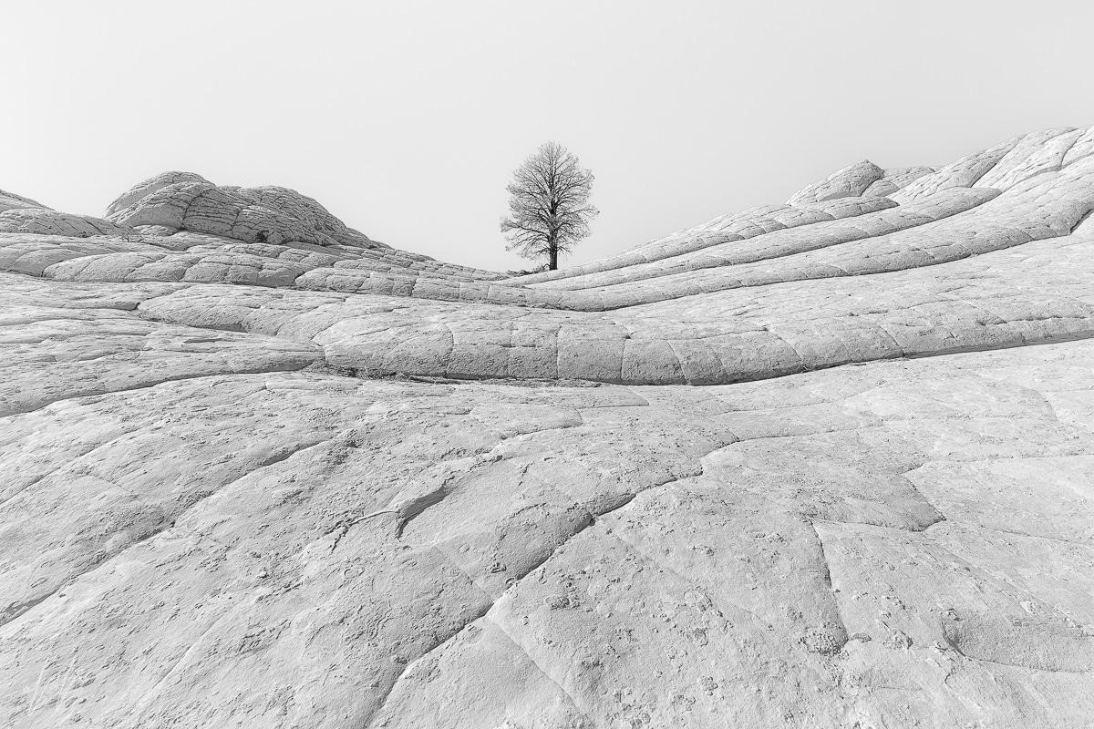 תמונת למרות הכל- עץ על גבעה סלעית