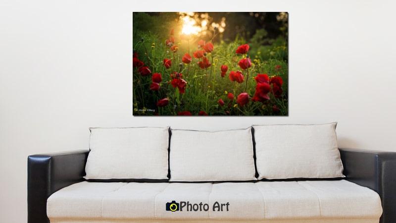 תמונת הדמיה של שקיעה אדומה שכזאת מתוך מגוון תמונות של שקיעה לבית
