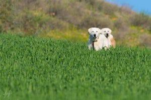 תמונה של כלבים באחו ועוד מבחר תמונות לחדר ילדים