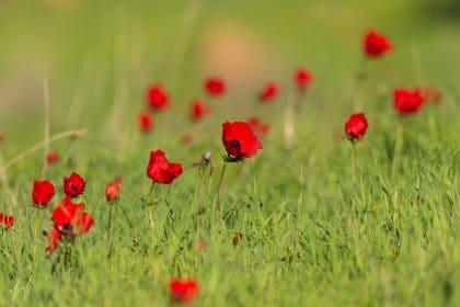 תמונת אדום ירוק ועוד מבחר תמונות של פרחים לבית