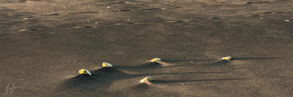 תמונת טבע יוצאת דופן של אבנים בחוף