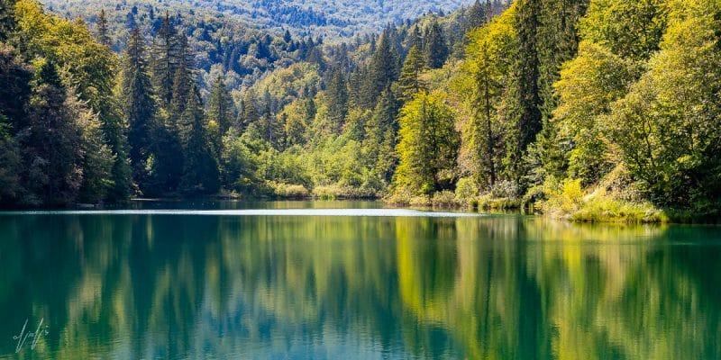 תמונת יער צבעוני מתוך מגוון תמונות מרהיב בחנות תמונות פוטו ארט